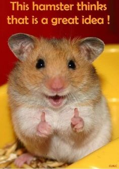 haveurattitude   this hamster thinks that is a great idea!