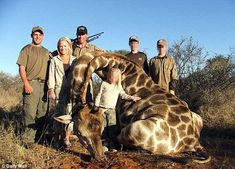 The gentle giants are tracked down and killed so tourist trophy hunters who pay thousands can take home pictures showing they have killed the animals. Entire families go on the hunts and appear to relish having their pictures taken with the dead giraffe. The animals are near extinction and are no longer found in countries like Nigeria, Mali and Angola.