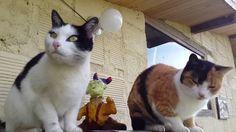 Gatos y Gatos 1