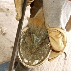 Easy to follow practical guide to trimming your own horse's feet in a way that imitates natural wear.