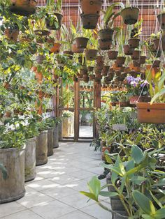 what I wouldn't do for this space ~ perfect orchid garden