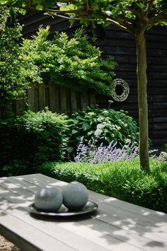The secret garden garden table Garden Stones, Garden Paths, Big Leaf Plants, Landscape Design, Garden Design, The Secret Garden, Flower Video, Big Leaves, Lush