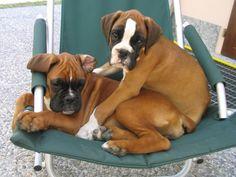 Duke & Mimì   cuccioli sulla sdraio   Deborah Guerra   Flickr
