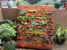 mur végétal, comment faire le jardinage sur palette, un jardin vertical avec des plantes grasses