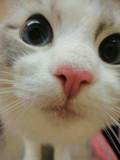 White kitten by dolly