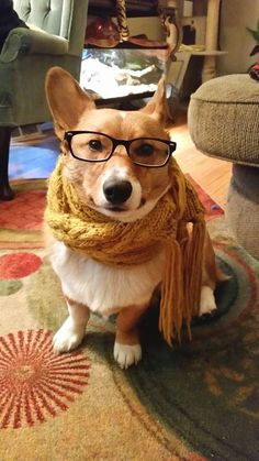I was a corgi before it was cool...