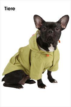 Koko von Knebel • Der Slicker Raincoat von Pinkaholic ist chic und zugleich praktisch! Er schützt Ihren Liebling vor Wind und vor Regen. Das Material ist federleicht und hochwertig verarbeitet. Durch die verwendeten Velcro Verschlüsse an der Unterseite ist das An- und Ausziehen sehr einfach.  Bilder anzeigen: http://www.imagesportal.com/newsletter/current/newsletter35.php