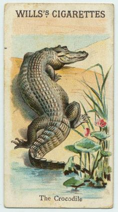 Wills's Cigarette cards   The Crocodile...love old pics like these as a piece of art or wall paper