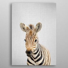 ZEBRA COUPLE BEAUTIFUL ANIMALS SEPIA BROWN BOX CANVAS PRINT WALL ART PICTURE
