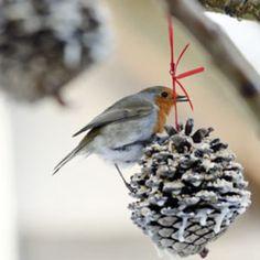 Bird Food - Pine Cone
