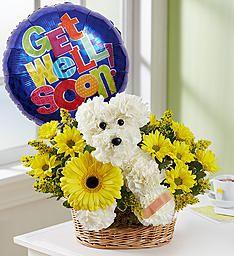 Sick As A Dog Get Well Flowers Get Well Soon Flowers Dog Flower