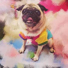 Happy Cheeze! #pug