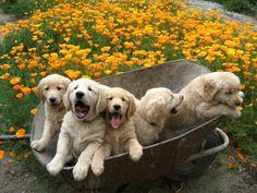 Look... we got in the wheelbarrow! ( my dog 4years old, still has that puppy joy 'face' ! )