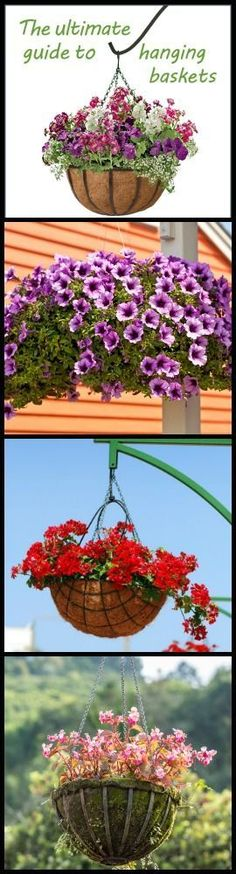 Great Resource: The Ultimate Guide To Hanging Baskets - http://www.ambius.com/blog/ultimate-hanging-baskets-guide/
