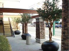 Olive tree planters