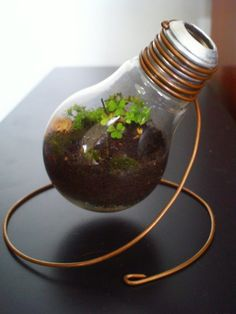 mini light bulb terrarium