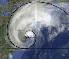 fibronacci in nature. 'Złota' zasada w naturze - blog. Ciekawe zajęcia z matematyki i nie tylko... http://www.inspirationgreen.com/index.php?q=fibonacci-sequence-in-nature.html