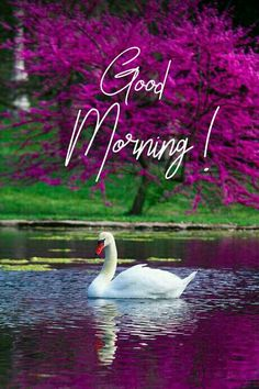 Good Morning Friends Images, Happy Good Morning Quotes, Latest Good Morning Images, Good Morning Greetings, Happy Morning Images, Good Morning Beautiful Pictures, Good Morning Images Flowers, Good Morning Photos, Good Morning Good Night