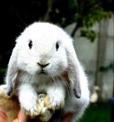 #animals #bunny