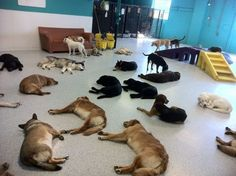 nap time at doggy day-care :) so cuteeee