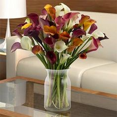 Assorted Mini Calla 100 Stems Enlarge  Assorted Mini Calla 100 Stems 100 Stems Item # 224774 Rated 3 out of 5 Open Ratings Snapshot (out of 2 reviews ) Share this Product: Facebook Digg DelIcioUs Twitter $224.99 Shipping & Handling included