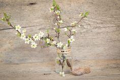 Rady nejen do zahrady Cherry Blossom, Unsere Kinder, Flower Vases, Kontakt, Free Images, Glass Vase, Plants, Home Decor, Branches