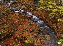 紅葉と渓流の写真