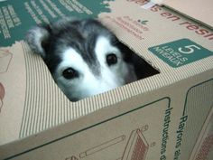 These photos of Tally inside a box are the photos that made her famous!