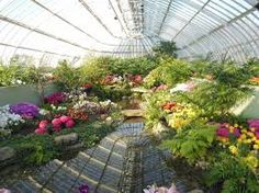 Image result for phipps conservatory orchids