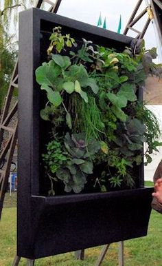 A standard Inka Wall Garden measures 3- by 4- feet and has a 2 foot 7 inch-square growing area.