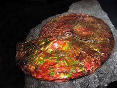 ammolite (from fossilization of ammonite)