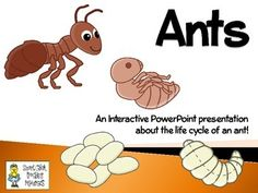Ants ~ An Interactive Presentation of their Life Cycle Montessori Toddler, Toddler Activities, Research Presentation, Science For Kids, Science Ideas, Background Information, Life Cycles, Ants, Teaching