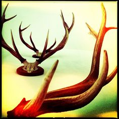 Antlers /