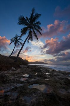 St. Croix, U.S. Virgin Islands. Palm trees, wild coastlines and lush rainforests adorn this gorgeous tropical oasis.