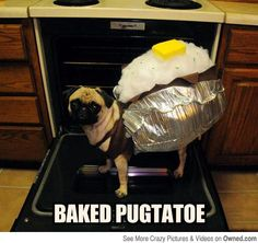 Funny pictures about Pugtato. Oh, and cool pics about Pugtato. Also, Pugtato. Dog Halloween Costumes, Pet Costumes, Animal Costumes, Halloween Fun, Best Dog Costumes, Costumes 2015, Haunted Halloween, Vintage Halloween, Funny Dogs