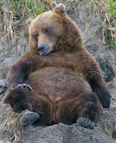 A lady bear Animals And Pets, Baby Animals, Funny Animals, Cute Animals, Baby Pandas, Wild Animals, Funny Bears, Cute Bears, Bear Pictures