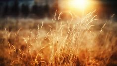 Close-Up wallpaper morning sun grass wheat forest happiness Beautiful Scenery Wallpaper, Beautiful Scenery Pictures, Scenic Wallpaper, Selfies, Sunshine Wallpaper, Photo Café, Best Nature Wallpapers, Sunshine Photos, World Most Beautiful Place