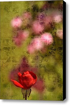 Romantic Roses Stretched Canvas Print / Canvas Art By Ps Photography