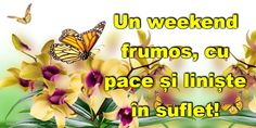 Happy Weekend, Good Morning, Places To Visit, Bee, Plants, Coffee, Home Kitchens, Buen Dia, Kaffee