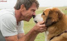 PETA planeja manifestações em cinemas contra filme 'Quatro vidas de um cachorro'