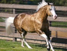 Big chex to cash, reining legend from AQHA