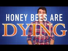 Honey Bees Are Dying | Why Should I Care?