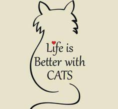 #Love#cats