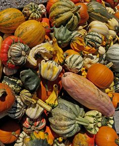 #Fall #Harvest #Event at #CloudMountain. http://www.naturesfootprint.com/celebrating-harvest-season