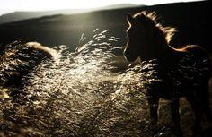 Голос в вашем уме подобен дикой лошади, которая несет вас куда ей хоче� | Жизненный опыт....