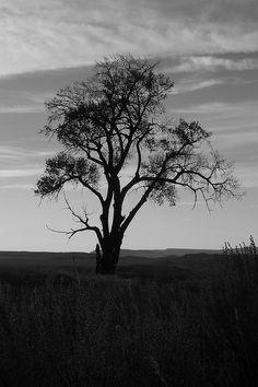 B&W; Tree on the Prairie 2