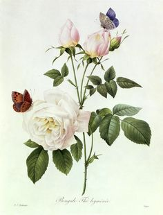 Rosa Bengale the Hymenes Painting  - Rosa Bengale the Hymenes Fine Art Print ♥♥♥