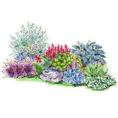Garden Plans for Shady Spots... Woodland Garden...A handful of hostas, impatiens, and red-twig dogwood combine to create a natural-feeling planting with four-season interest. Garden size: 6 by 12 feet. Download this free plan.