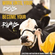 Work until your idols become your rivals! Livestock Judging, Showing Livestock, Cow Quotes, Animal Quotes, Shirt Quotes, Show Steers, Pig Showing, Heartland Quotes, Farm Show