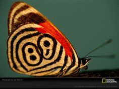 """@JohnMcCullough_ """"I do approve of this butterfly's active promotion of the colon and semicolon."""""""